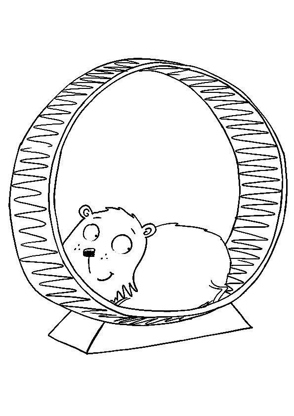 17 best images about pet play on pinterest maze pets for Hamster coloring pages printable
