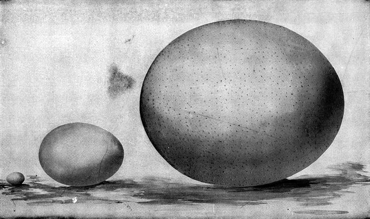 File:Eggs of hummingbird, hen, and ostrich.jpg - Wikimedia Commons