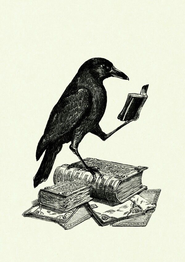 Smart bird #crow #smart #book #awesomedrawing #knowledge