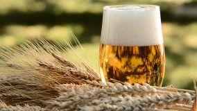 Beer Stock Footage Video - Shutterstock