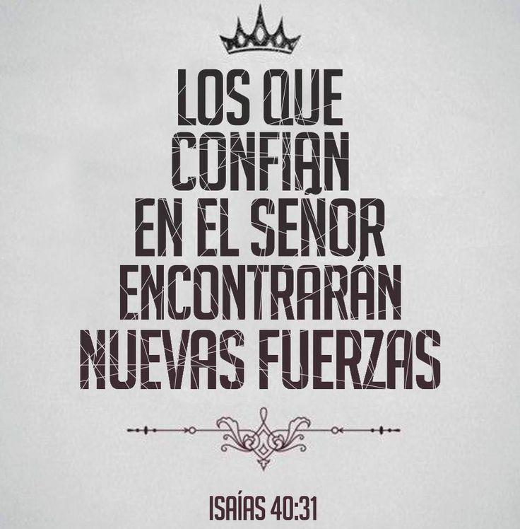 Los que confían en el Señor encontrarán nuevas fuerzas...Isaias 40:31 /Frases ♥ Cristianas ♥