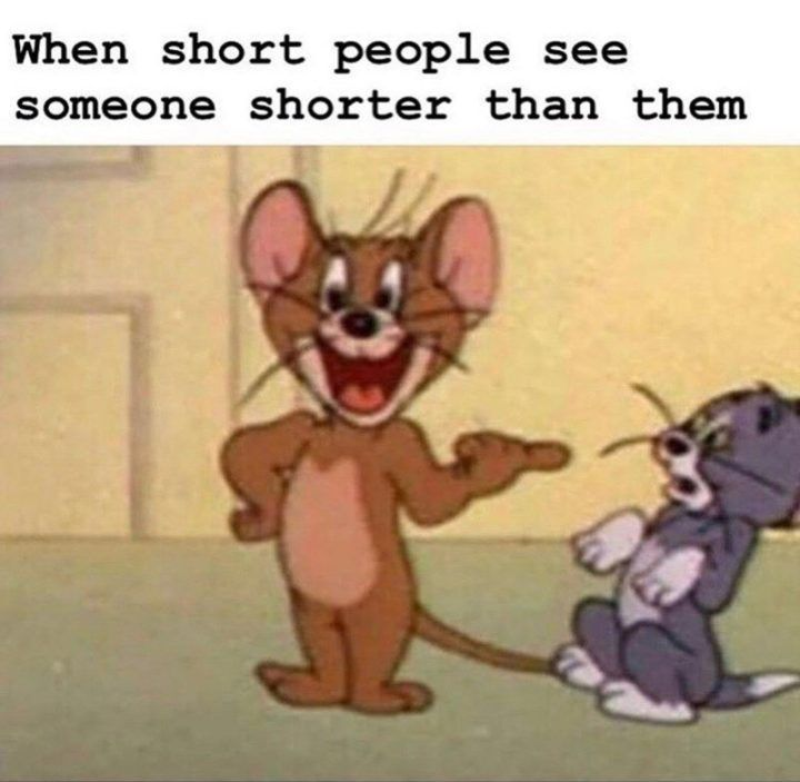 61 Funny Clean Memes When Short People See Someone Shorter Than Them Funny Clean 61 Funny Clean Memes Th Crazy Funny Memes Jerry Memes Really Funny Memes