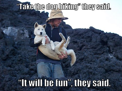 Funny Hiking Meme : 17 best hiking humor images on pinterest funny stuff funny things
