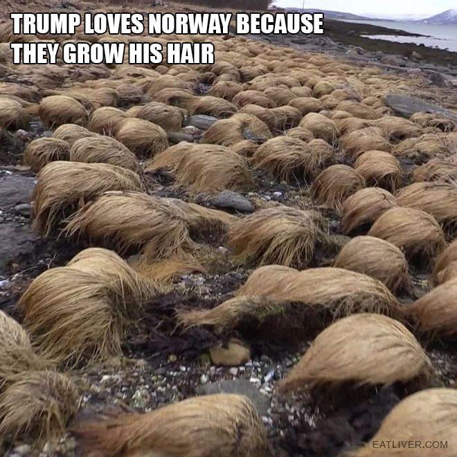 Hairy Trump Collecc Hairy Stones