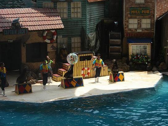 Sea Lion Show at Safari World in Bangkok, Thailand