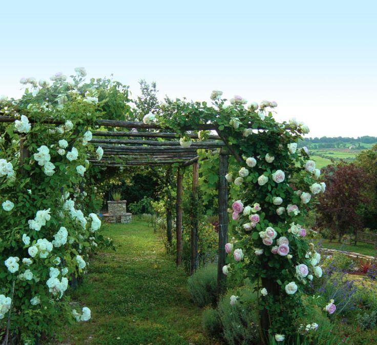 Il Bersò: libri sulle rose