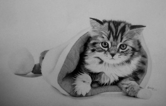DeviantArt: More Collections Like kitten - pencil drawing by roni-yoffe