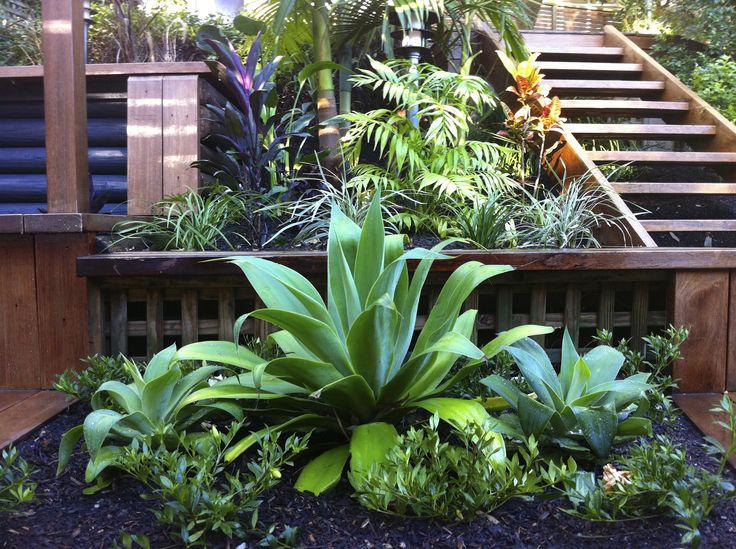 a succulent plant that works well in a tropical planting style - Garden Design Tropical