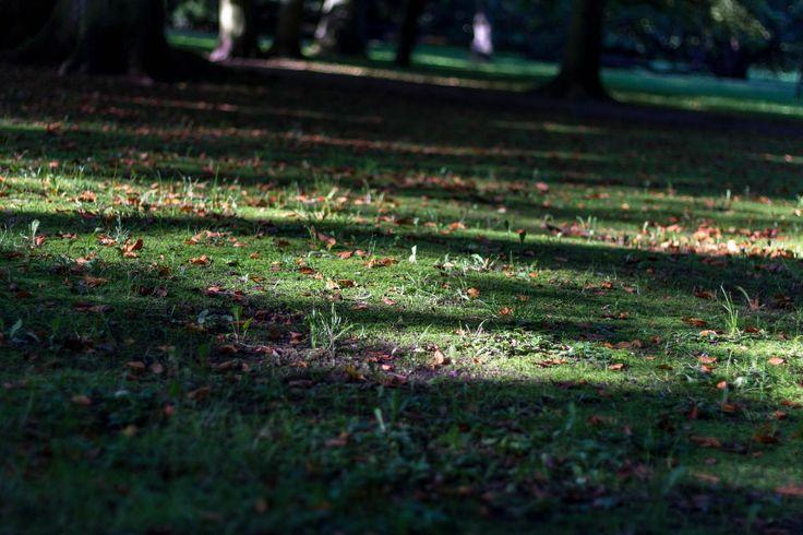 Park grass - Clickasnap