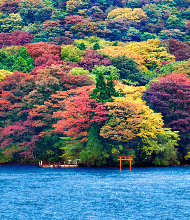 color de los árboles!