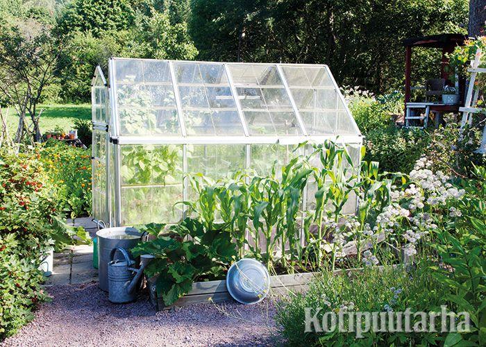 Pienikin kasvihuone on tervetullut lisä keittiötarhaan. Kasvihuoneen seinusta luo ihanteellisen suojan maisseille ja kesäkurpitsoille.