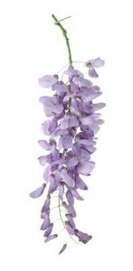 How to Make a Wisteria Tree With Crepe Paper thumbnail
