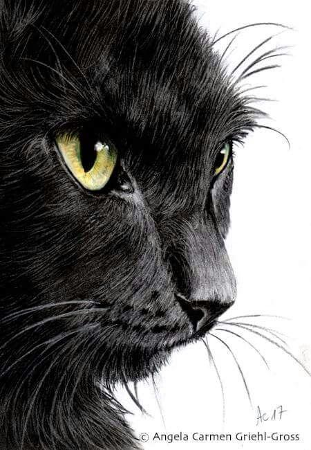 Schwarze Katze im Profil, 21x30cm, Zeichenkohle & Pastellstifte auf Papier. Black Cat Profile, 8x12inches, Charcoal & pastel pencils on paper.