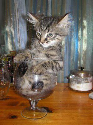 image de chaton drole confort.