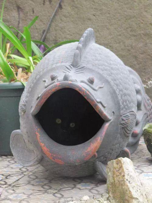 Gatito tímido