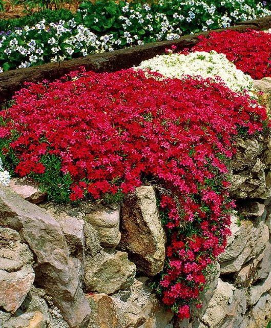 Низкорастущие почвопокровные растения для вашего сада