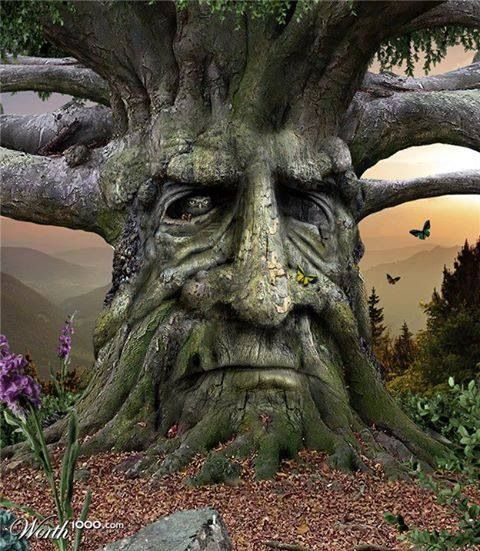 The Celts saw a face on each and every tree, and believed that souls or spirits lived inside of them.
