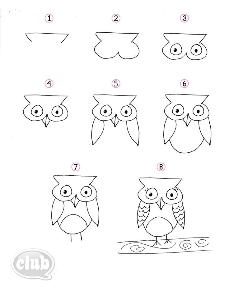 How to draw an owl  (Indoor recess)
