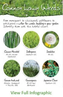 9 best images about All Things Lawn Related on Pinterest   It is ...