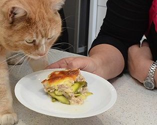 Garfield Lasagne & a Healthy Feline Treat  Lasagne Recipe for Cats - Feast for a Famous Feline.  https://www.epetstore.co.za/lasagne-recipe-for-cats