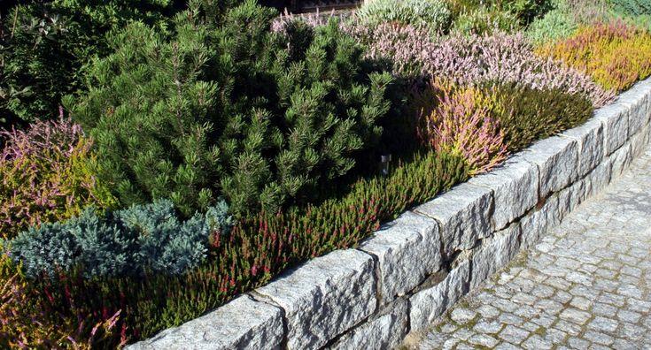 wrzosowisko na skarpie w ogrodzie przydomowym wg projektu autorstwa PracowniaOkaz
