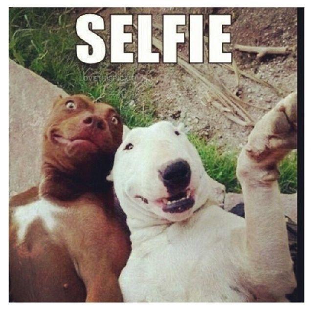 SELFIE funny quotes cute animals adorable instagram instagram pictures instagram graphics instagram quotes selfie pitbulls