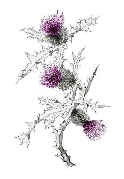 Scottish Thistle Tattoo idea