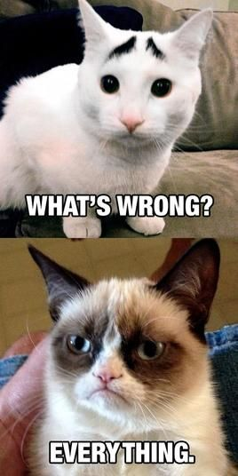 #Grumpy cat