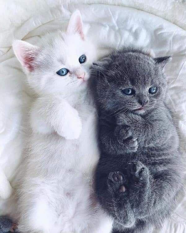 Фото с котиками милыми