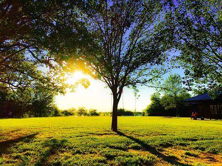 Fa, Fű, Napnyugta, Természet, Fekvő