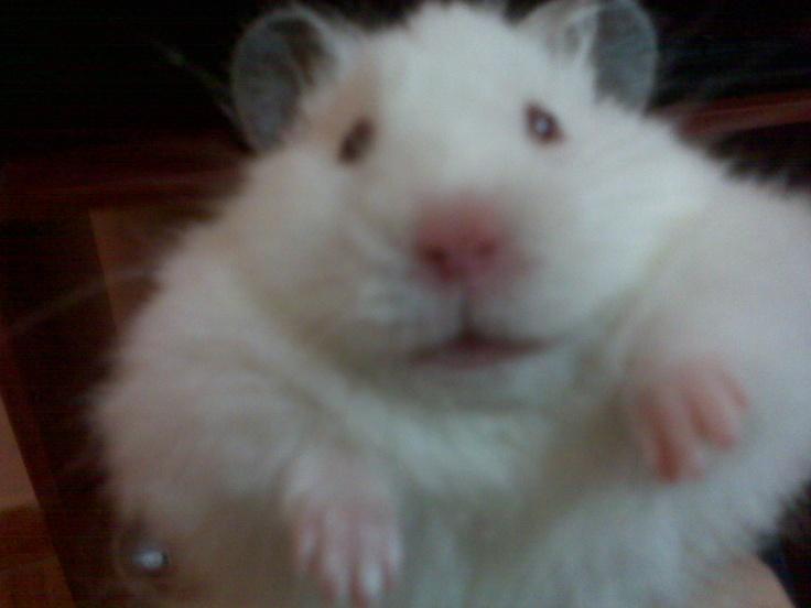 hola señor gordo #FreddoGodofreddo