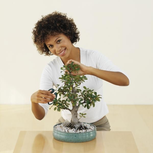 I've been wanting to experiment with bonsai trees and love the idea of training my teeny tiny jade plant into a bonsai tree. I'm patient. I'm thrilled. | How to Trim Jade Bonsai