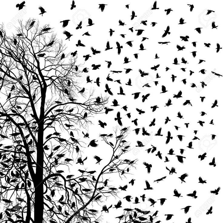 Illustration Flock Of Crows Over Trees Royalty Free Cliparts ...
