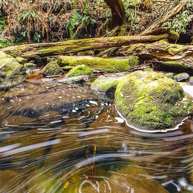 The river flowing through the Mount Field National Park. Mount Field is an easy day trip from Hobart, providing you with plentiful walks, waterfalls and mountains. #discovertasmania #mtfield #nationalpark Image Credit: matthewtaylorthomas