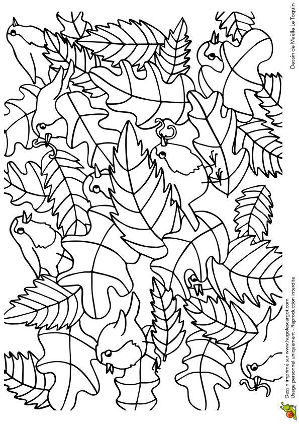 Coloriage cache cache feuilles oiseaux sur Hugolescargot.com - Hugolescargot.com
