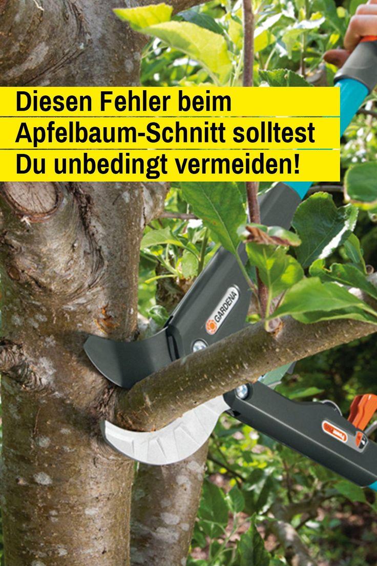 Apfelbaum schneiden – selbst ist der Mann