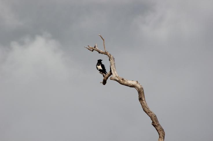 Sodwana Dec 2012