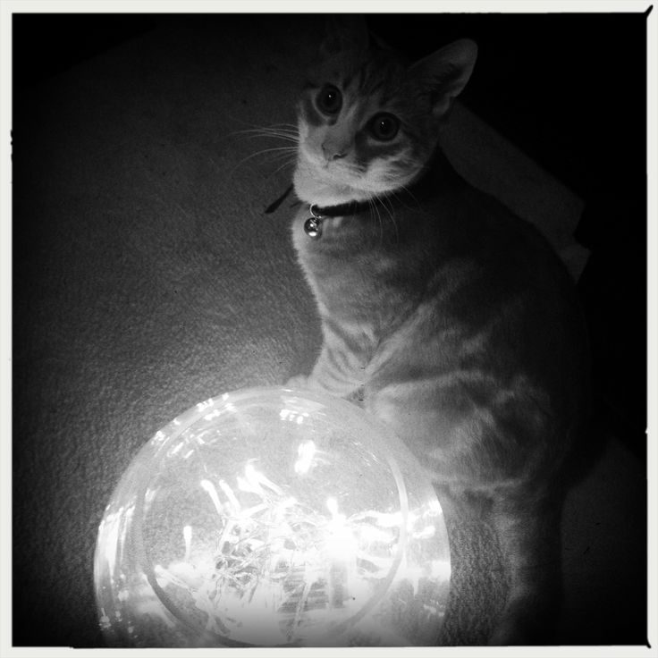 Bowie playing with my new homemade lamp