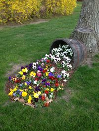 """A spilled flower pot is the perfect idea of bringing a little whimsy to your garden.  Just tip Southern Patio's 22.5"""" Natural Oak Whiskey Barrel on its side, plant bushels of mums, and you have your own spilled flower planter. http://www.southernpatio.com/products/planters/hdr-012221-22-5-hdr-whiskey-barrel-natural-oak/"""