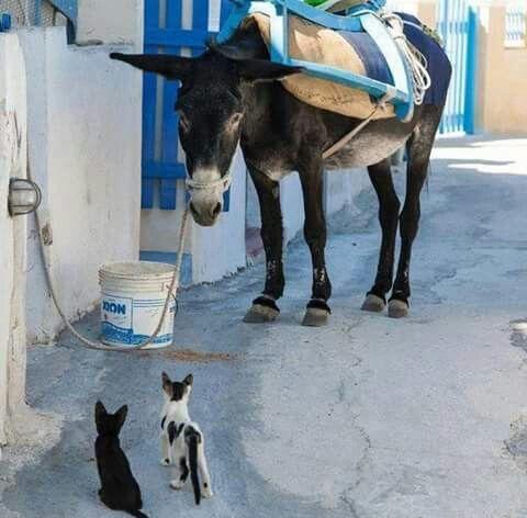 Donkey & cats Greece www.oiamansion.com