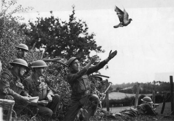 Em 1918, um pombo chamado Cher Ami, um dos cerca de 100.000 pombos-correio usados durante a guerra, conseguiu salvar 500 soldados americanos. Apesar de ter sido baleado por soldados alemães, o pombo conseguiu entregar a mensagem aos soldados que tinham sido contados por trás das linhas inimigas. Ele perdeu um olho e uma perna, mas os médicos do exército americano salvaram a vida dele e ainda fizeram uma perna de madeira.