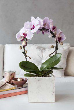 Nå er butikkene fulle av orkidéer i alle former og fasonger.