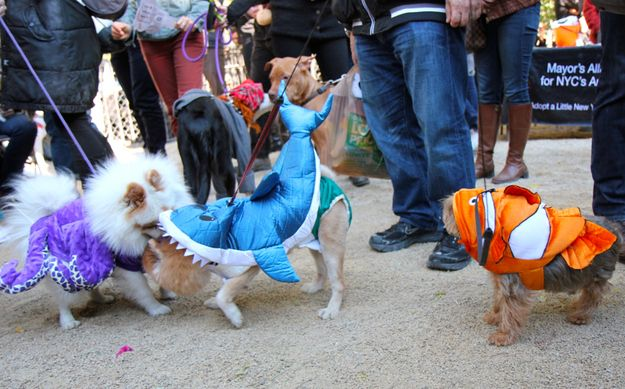 The cast of Finding Nemo   The 70 Best Costumes At New York City's Most Important Dog Costume Competition #dogchienperro