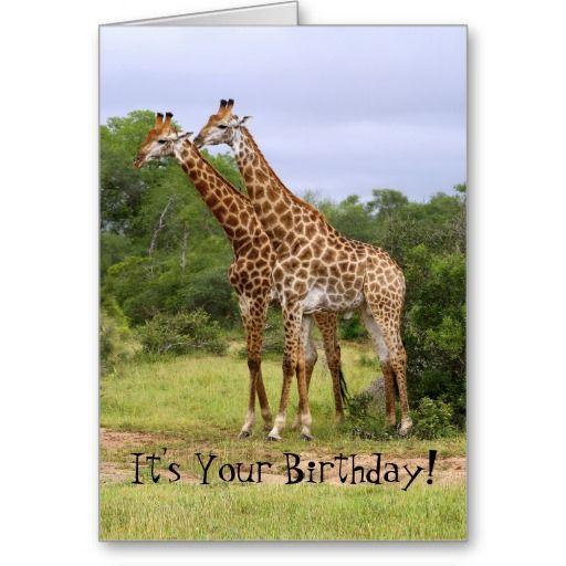 Go Wild! Happy Birthday Giraffes Card #Giraffe #Humor  http://www.zazzle.com/go_wild_happy_birthday_giraffes_card-137019346755593120?rf=238577061362460707
