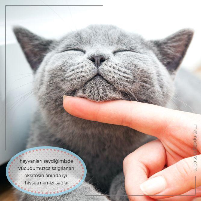Hayvanları sevdiğimizde, vücudumuzca salgılanan oksitosin anında iyi hissetmemizi sağlar.    #kedi #cat #animallover #animal #instagood #hayvansevgisi #instalike #prilaga #Turkey #ilginçbilgiler #doğa #nature