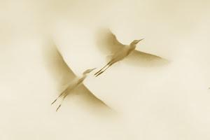 free flight by Ag Adibudojo  #2 of the day, pixoto