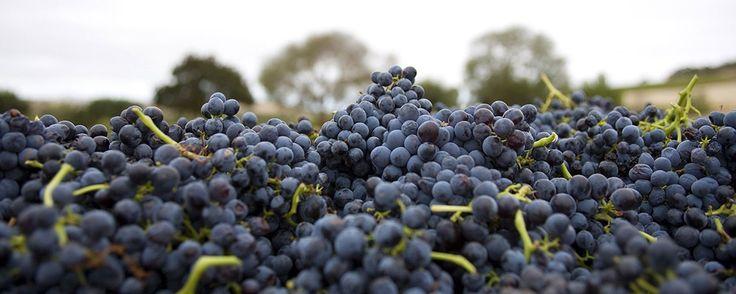 Penfolds Wines - ZILM VINEYARD