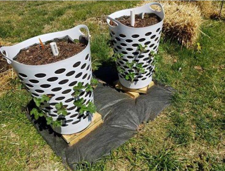 Grow strawberries in a plastic clothes hamper. Could also work for potatoes, herbs, flowers... Place a pipe with holes drilled into it down the center to evenly water the plants.