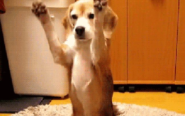 26 Dog GIFs So Cute They Might Kill You