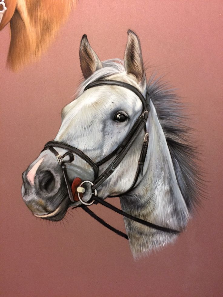 Dessin animalier, portrait de cheval au pastel, détail d'une composition